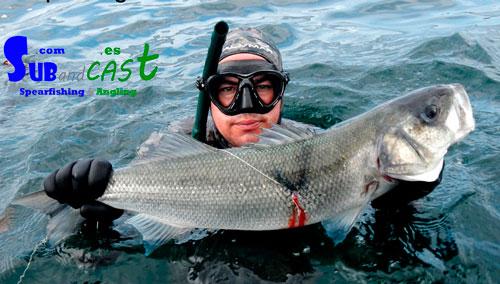 learn spearfishing in Ireland