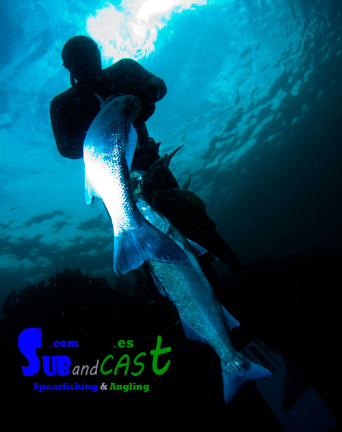 Spearfishing course in Ireland