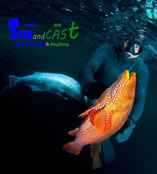 Spearfishing course in ireland1