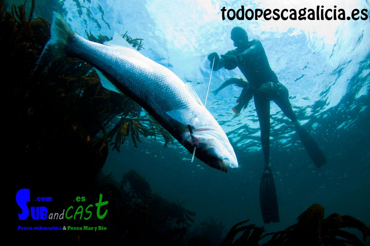 Spearfishing Regulation in Ireland - SubandCast